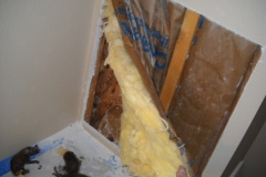 Noises in Wall Removal and Sent to a Wildlife Rehab