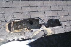 Raccoon Roof Damage