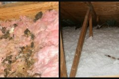 Before and After Clean up in Attic